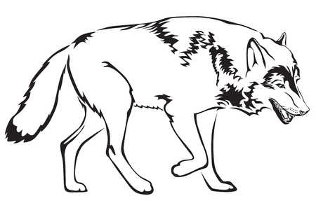 furry tail: The contour image of walking mother wolf