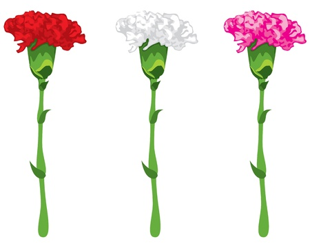 Flowers carnations, pink, red and white Illustration