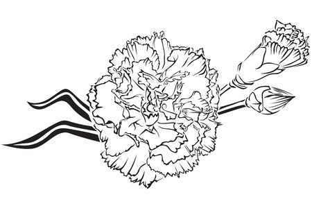 claveles: La imagen de contorno de hermoso ramo de claveles