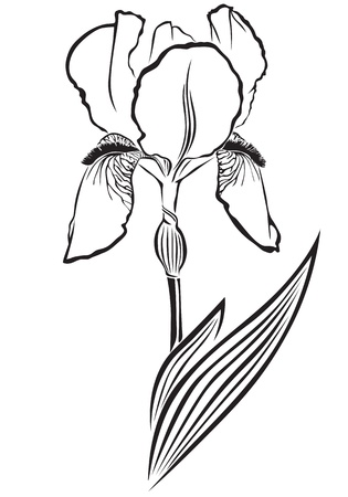 flower bed: The contour black-and-white image of a flower of iris