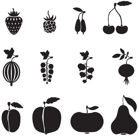 agrio: Un conjunto de im�genes de frutas y bayas Vectores