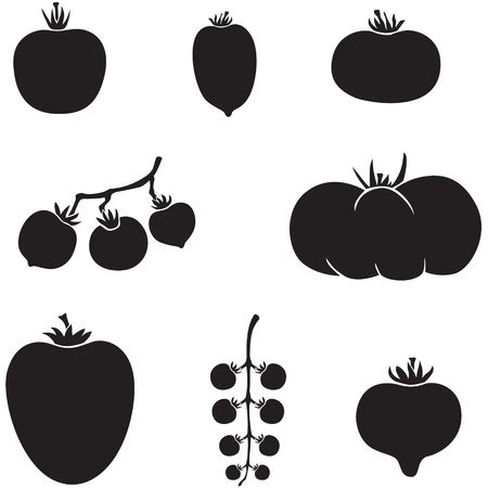 A set of images of different varieties of tomatoes Stock Vector - 14789912
