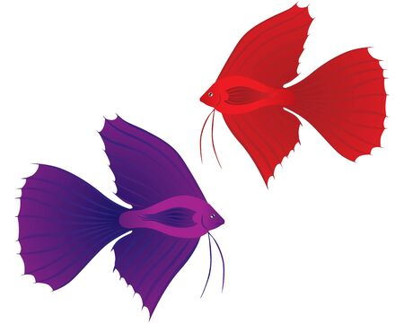 The stylized image of a red and blue Betta Splendens fish Vector
