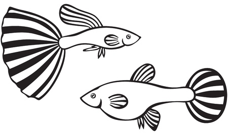 Line art image of female and male guppy fish Vector