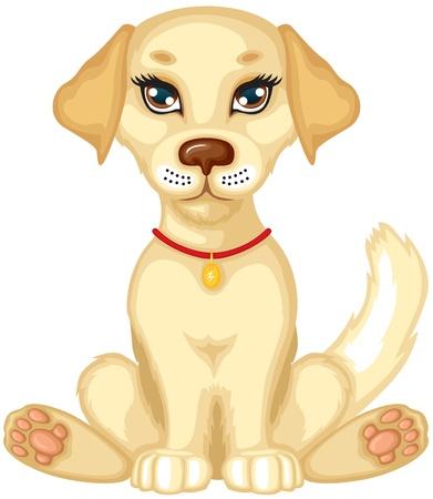 furry animals: Lindo pálido perrito se sienta y mueve la cola
