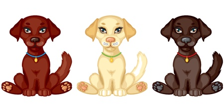 labrador retriever: Cartoon brawn, pale and black little puppies Illustration