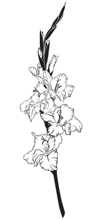 Black and white line-art image of a flower gladiolus Иллюстрация