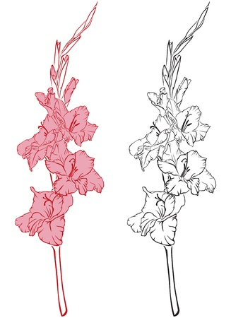 line-art image of a flower gladiolus Stock Vector - 15354708