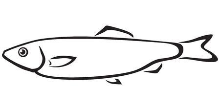 Contour black and white sea fish sprat