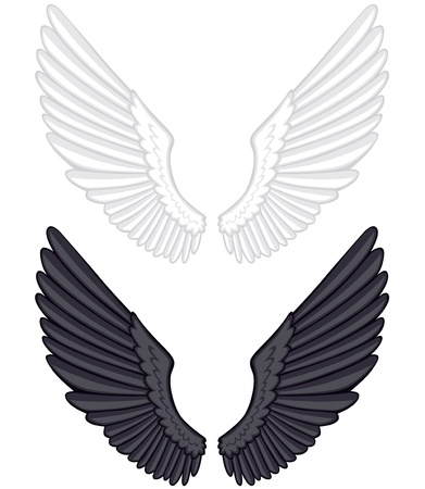 Black and white feathered wings wide open Vector