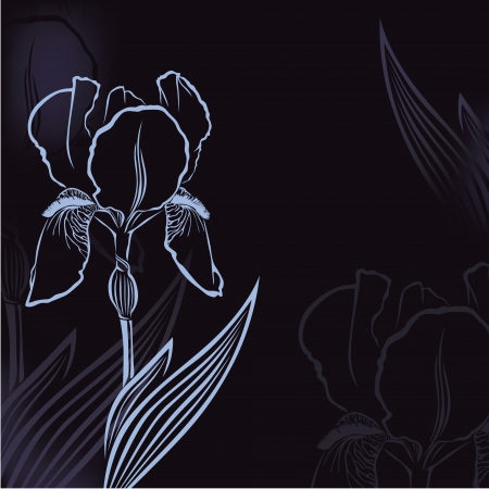 Dark congratulatory background with flower iris Vector