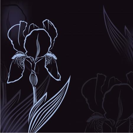 Dark congratulatory background with flower iris Stock Vector - 16103333