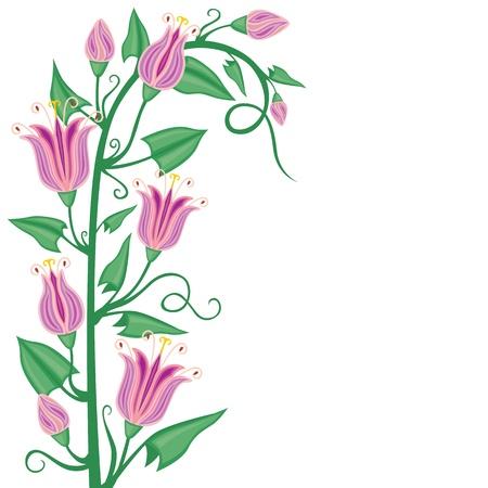 convolvulus: Congratulatory background frame of blooming pink flowers convolvulus Illustration