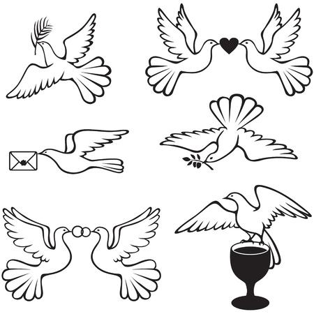 paloma: Establecer im�genes simb�licas con las palomas