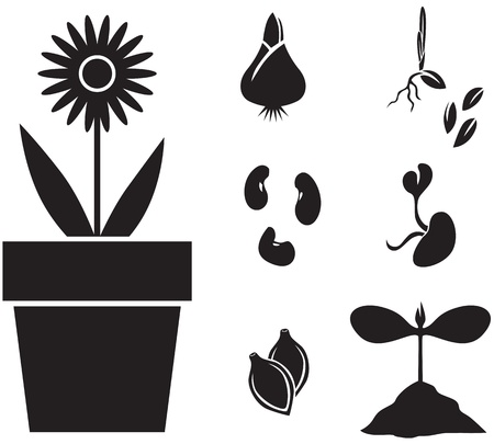 bulb and stem vegetables: Set of images of plants for planting: flower, seeds, sprouts