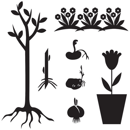 spring bed: Set of silhouette images of garden seedlings and sprout