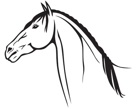 Contour image of a beautiful horse head Stock Vector - 19084203