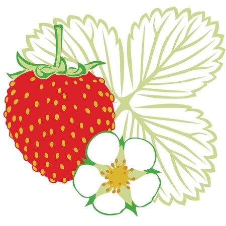 Image of delicious ripe strawberries with blossom and leaf Vector