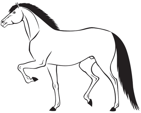 drafje: De contour beeld van een mooi paard lopende draf