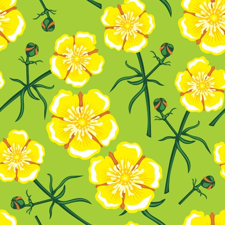buttercup: Seamless pattern with beautiful yellow buttercup flower Illustration