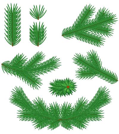 Set green Christmas fir branches  Stock Vector - 23551837