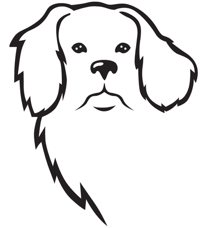 cane terranova: Contour Terranova testa di cane in piena faccia