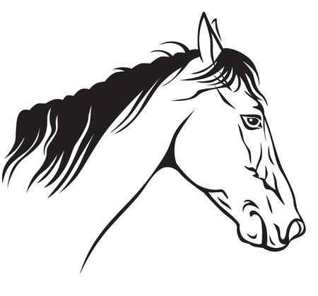 Contour image of a beautiful horses profile Stock Vector - 23551867