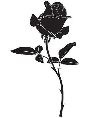 줄기: 실루엣 이미지 아름다운 장미 꽃 일러스트