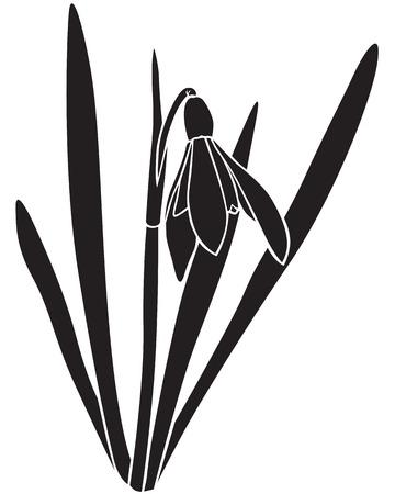 Silhouette image spring snowdrops flower Ilustração