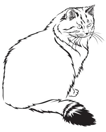siberian: Contour image of flurry Siberian cat Illustration