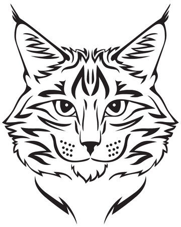 lynx: Contour image of muzzle flurry Maine Coon cat