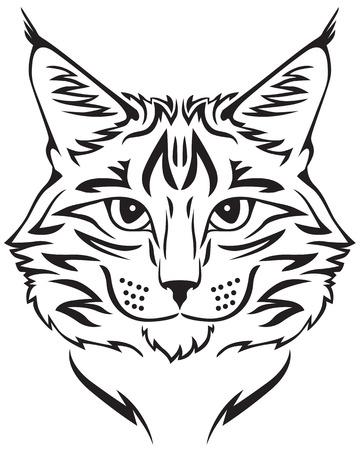 Contour image of muzzle flurry Maine Coon cat