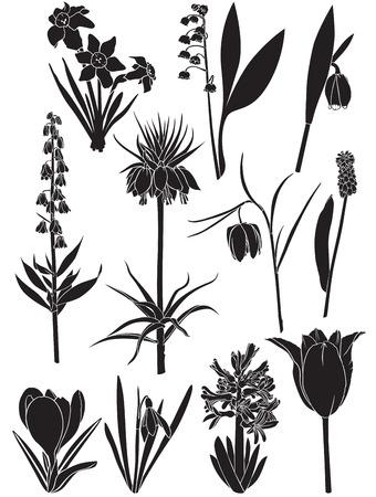 Set silhouette image of spring bulbous flowers Illustration