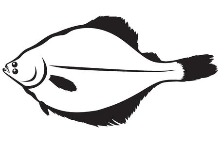 flounder: Contour image of fish flounder