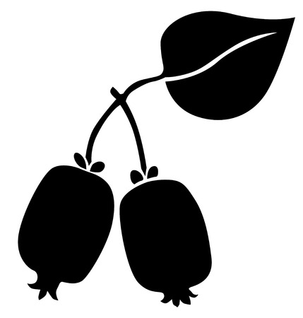 drupe: Silhouette black and white image of Actinidia berries