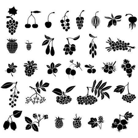 black currants: Silhouette black-and-white image of berries set  Illustration