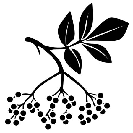 Silhouette black and white image of elderberry Illustration