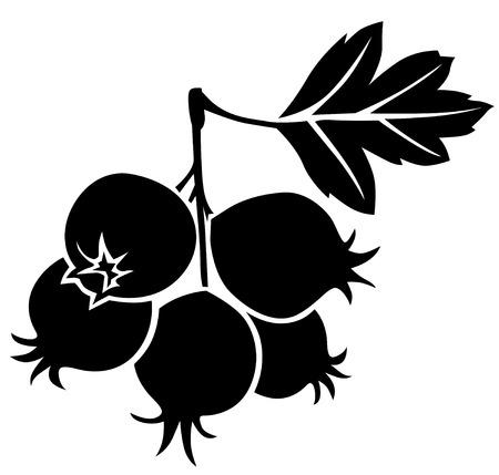 Silhouette schwarz und Weiß-Bild von Weißdornbeeren