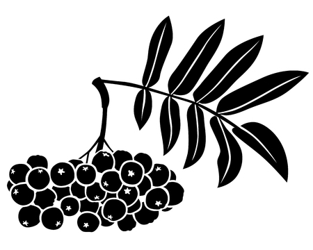 drupe: Silhouette black and white image of rowan berries