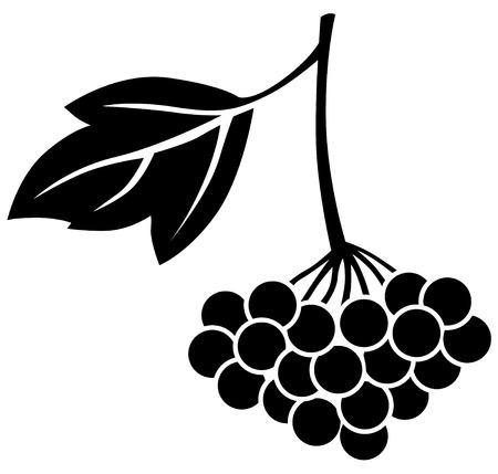 drupe: Silhouette black and white image of viburnum berries Illustration