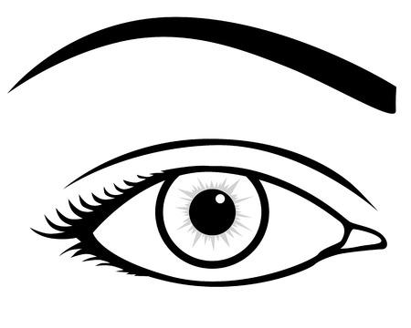 eyelids: Contour image of female eye Illustration