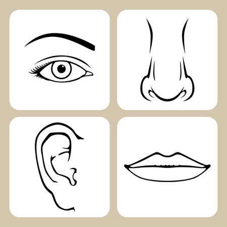 Contour image of nose, eye, mouth, ear Vector