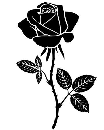 rosa negra: Ilustraciones del vector de la silueta de la hermosa flor color de rosa. Esquema aislado