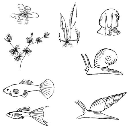 Vector illustrations of sketch image of aquariums animal and plants