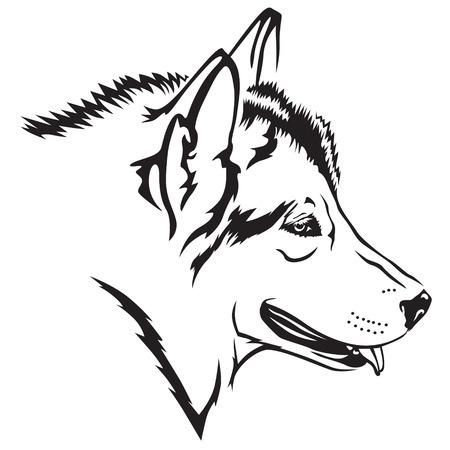 Vector illustrations of contour Malamute dog head