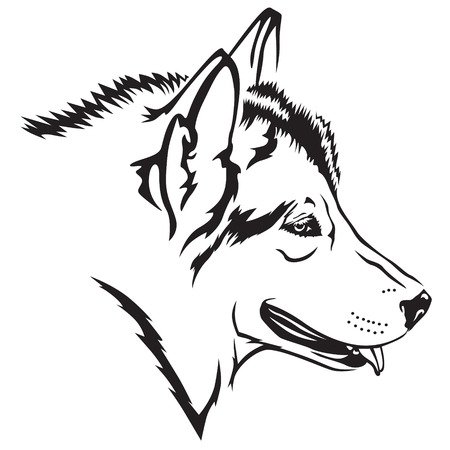 shaggy dog: Vector illustrations of contour Malamute dog head