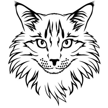maine cat: Vector illustrations of  contour furry cat portrait Illustration