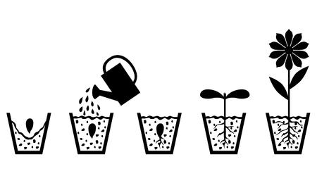 crecimiento planta: Ilustraciones del vector de imagen conjunto de esquema de crecimiento de las plantas a partir de semillas de florecer