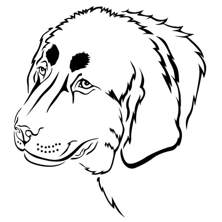 tibetan: Vector illustrations of Tibetan Mastiff breed dogs head contour