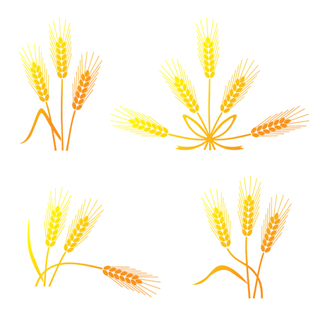 oat field: Vector illustrations of silhouette spikelet of cereals